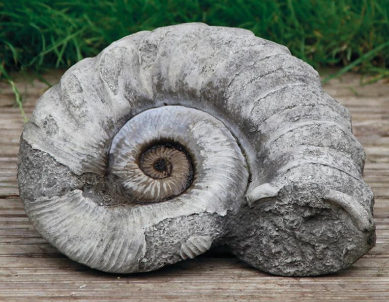 ammonite stone garden ornament