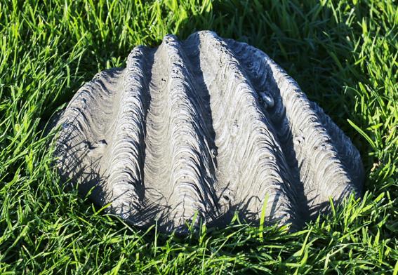 stoneware sea shell